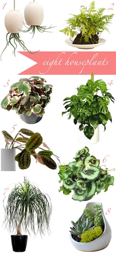 How to buy houseplants once and for all a cup of jo - Plants that dont need soil natures wonders ...