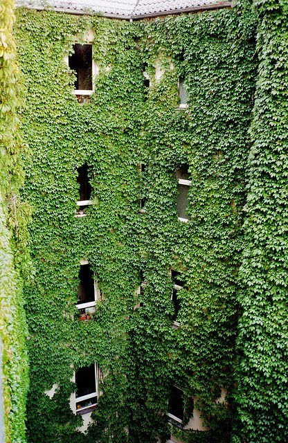 Ivy Covered Houses To Add A Breath Of Fresh Air To Your Morning. They Look  Right Out Of Storybooks.