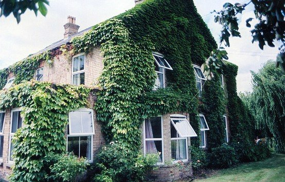 Awesome Ivy Covered Houses To Add A Breath Of Fresh Air To Your Morning. They Look  Right Out Of Storybooks. Amazing Ideas
