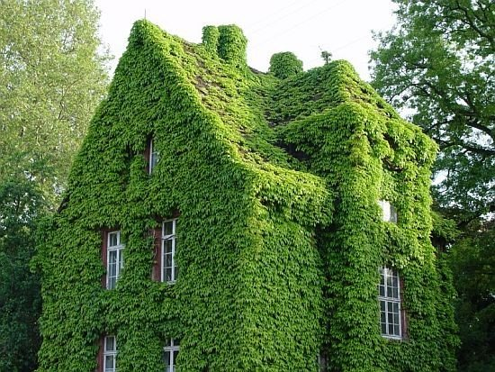 Ivy Covered Houses To Add A Breath Of Fresh Air To Your Morning. They Look  Right Out Of Storybooks. Pictures