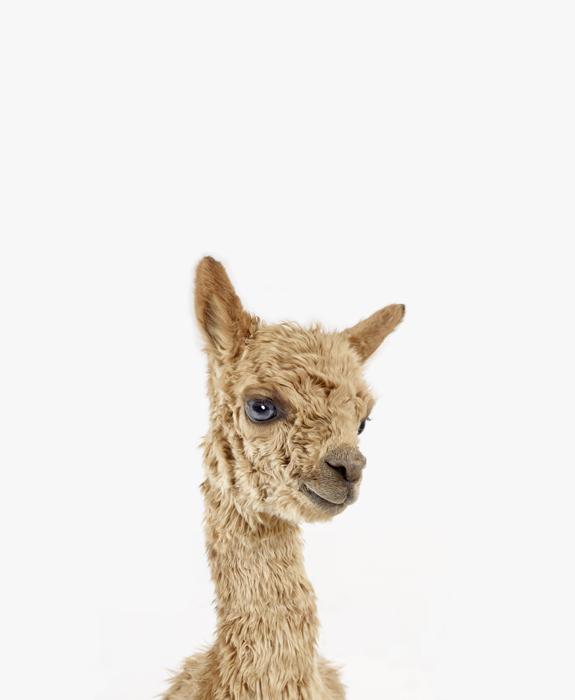 Image Result For Baby Animal Prints For Nurserya