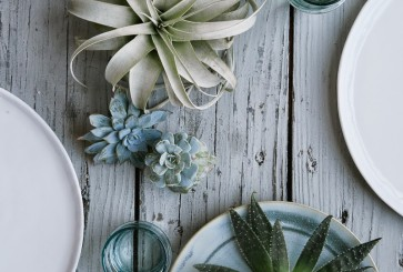 succulents-centerpiece-gifts-kendra-smoot-alpha-smoot-cup-of-jo-2