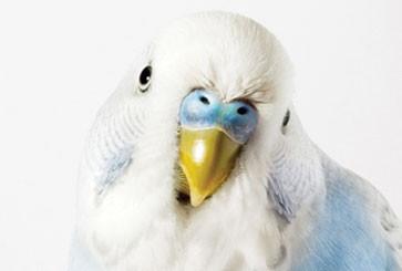 wknd-bird-thumb