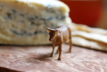 cheese-plate-animals-how-to-style-arrange