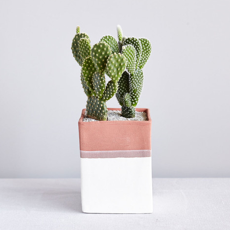 flowers-the-sill-house-plants-gift-best