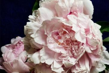 keri-herer-botanicals-flower-prints-etsy