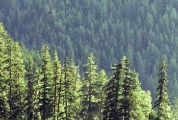 forest_crop