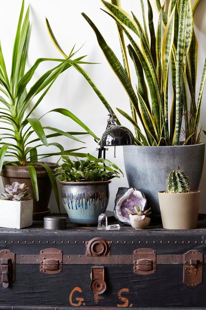 Caroline donofrio living room plants