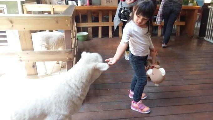eva_sheep