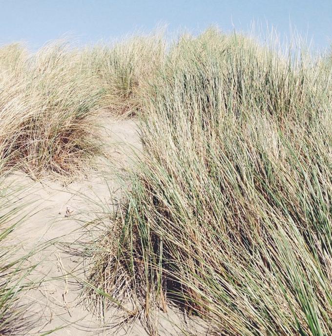 dunes-beach
