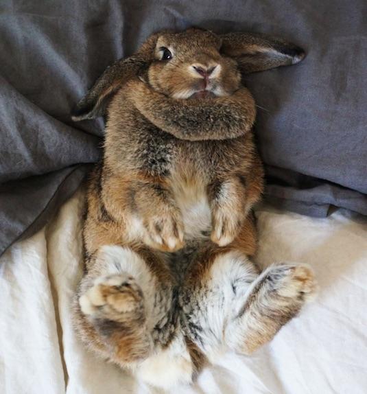 bunny-katie-carletti