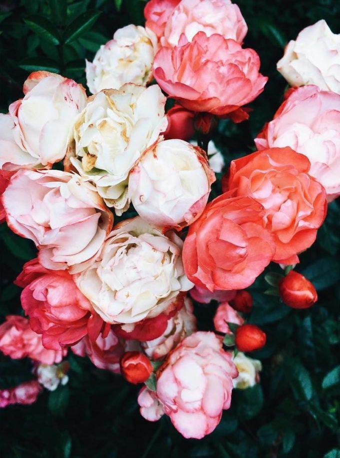 Flowers by Nicole Franzen