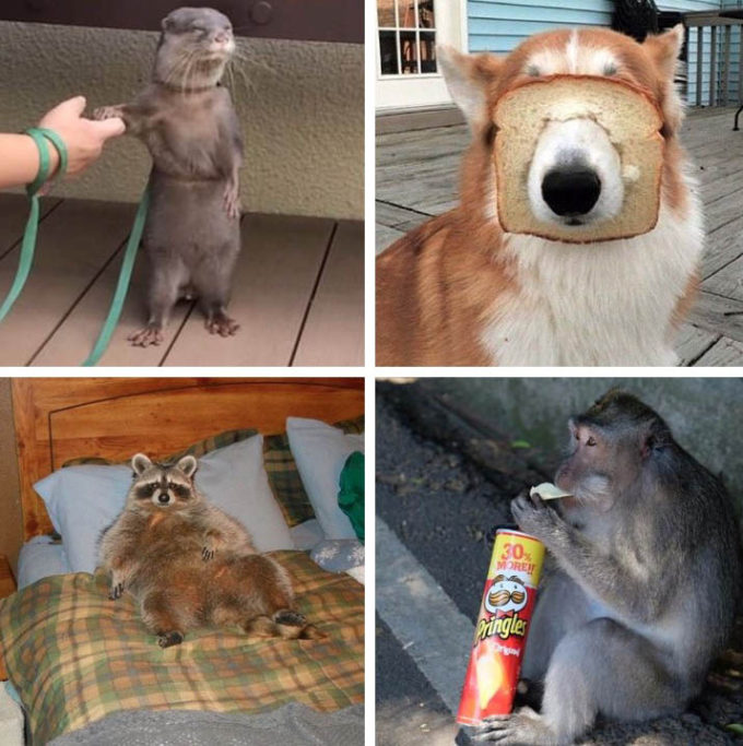 Chill Wildlife on Instagram