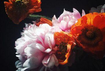 veronica-olson-flowers