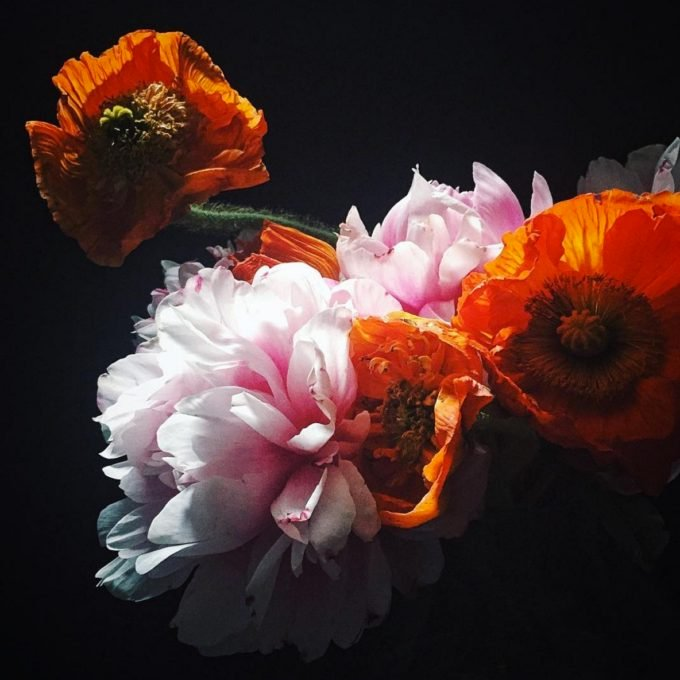 Veronica Olson flowers