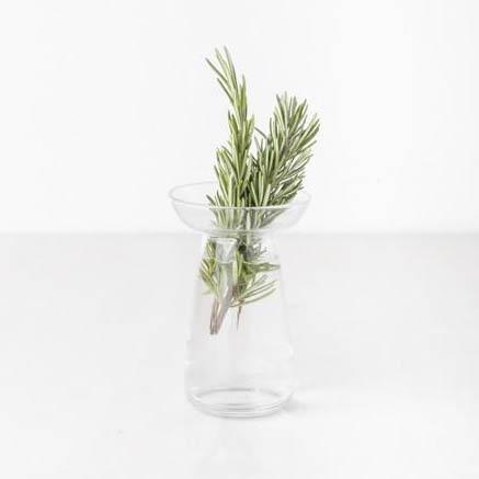 Plant Vessel