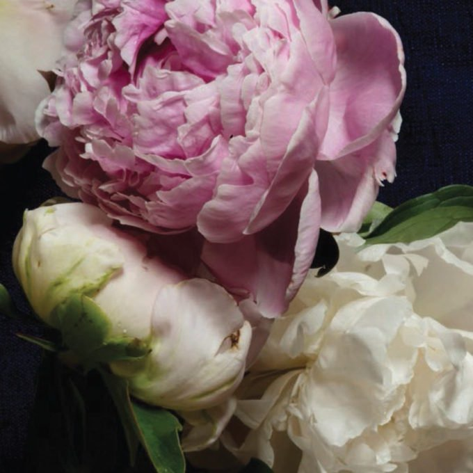 Peonies Stationery