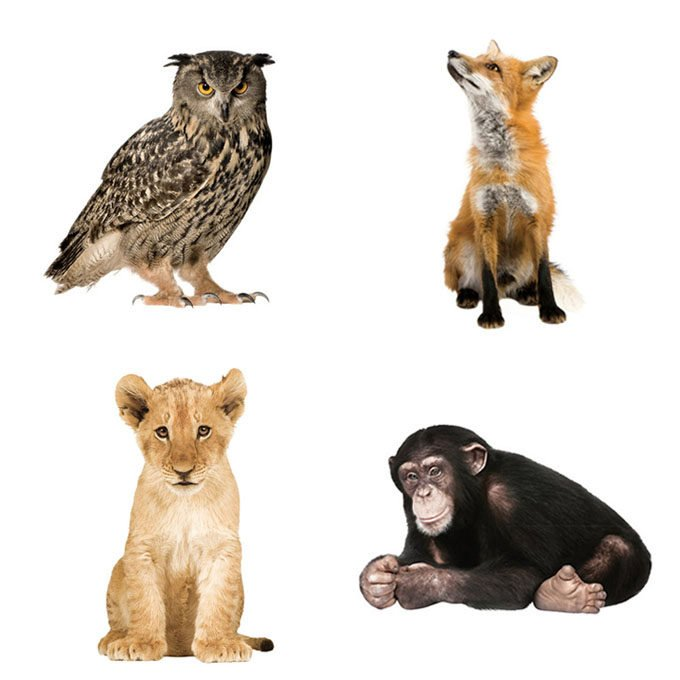 Animal Wall Stickers Part 53