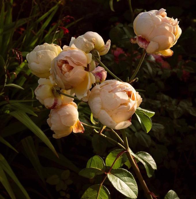 Flowers by Kelsey McClellan