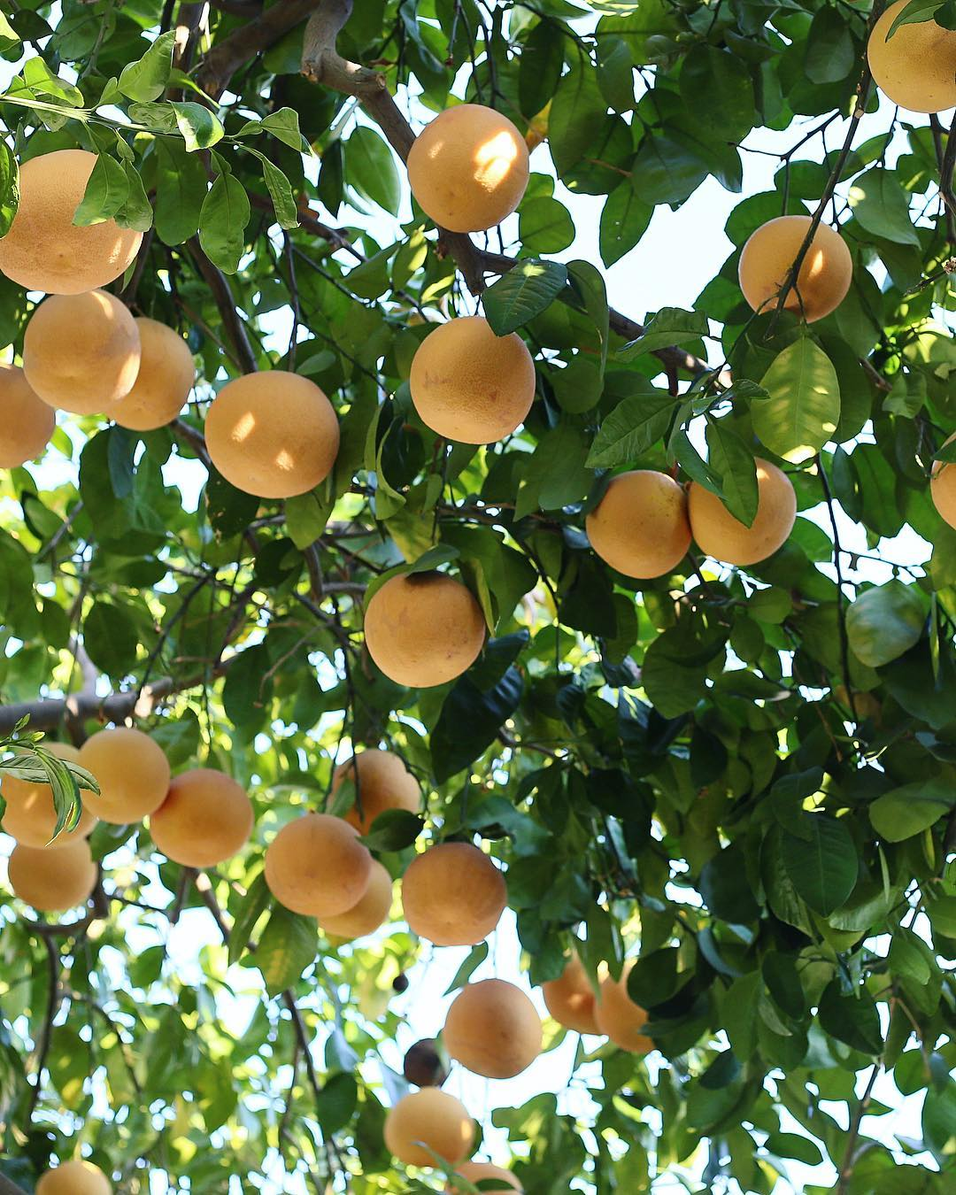 Lemons by Taylor Anne Swaim