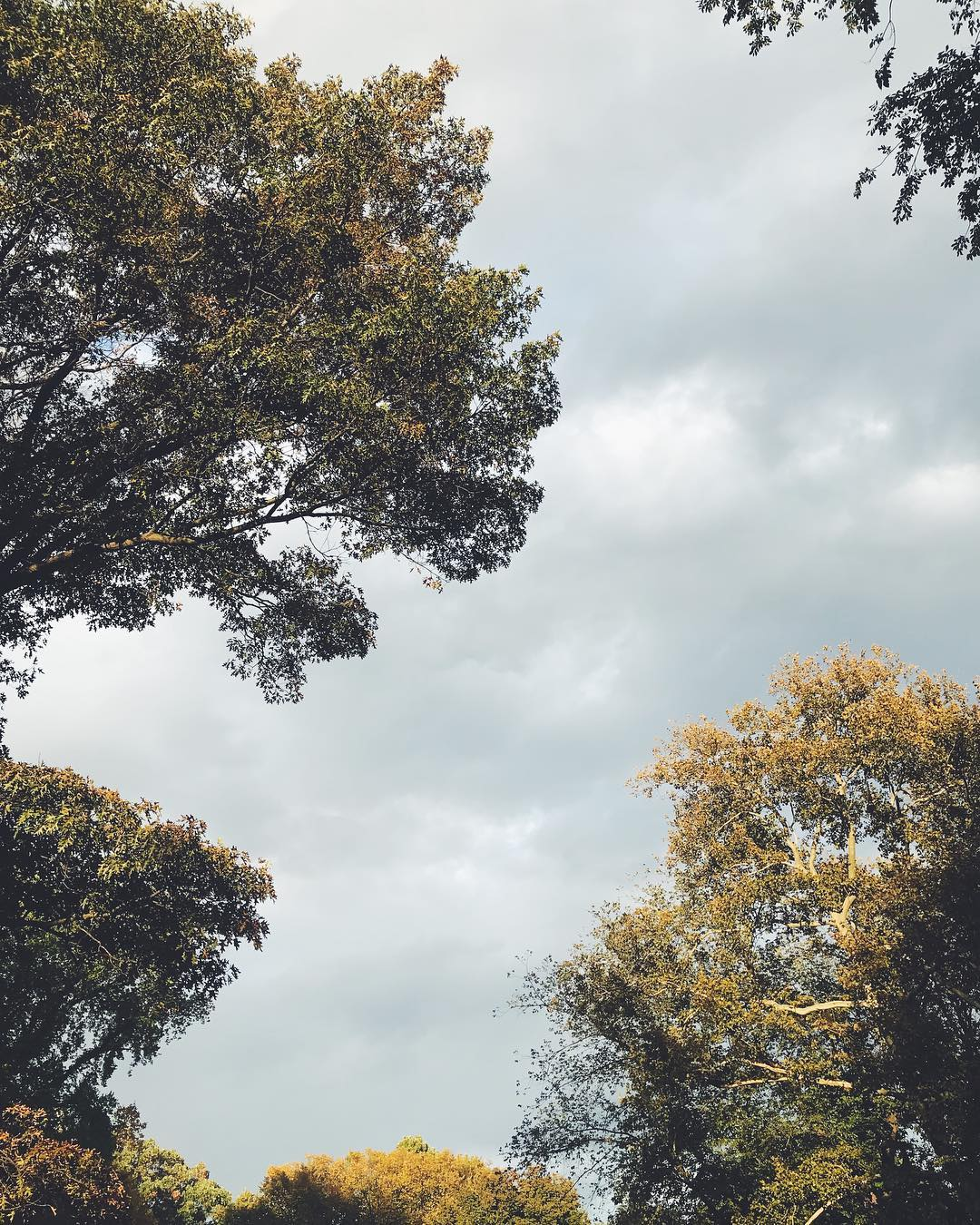Leaves by Liz Libré