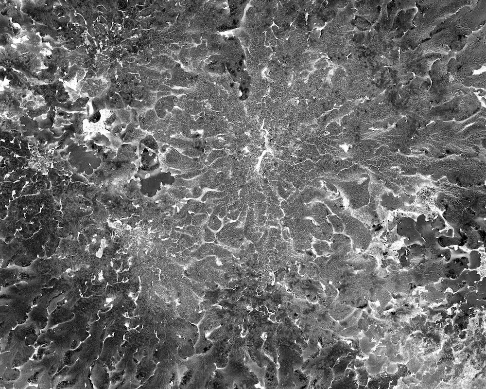 Lichen, Flavoparmelia caperata by Katherine Wolkoff