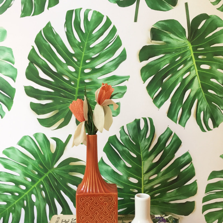 Monstera Deliciosa Plant Wallpaper
