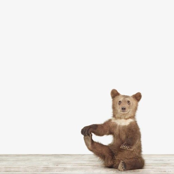 Bear Cub photo print by Sharon Montrose