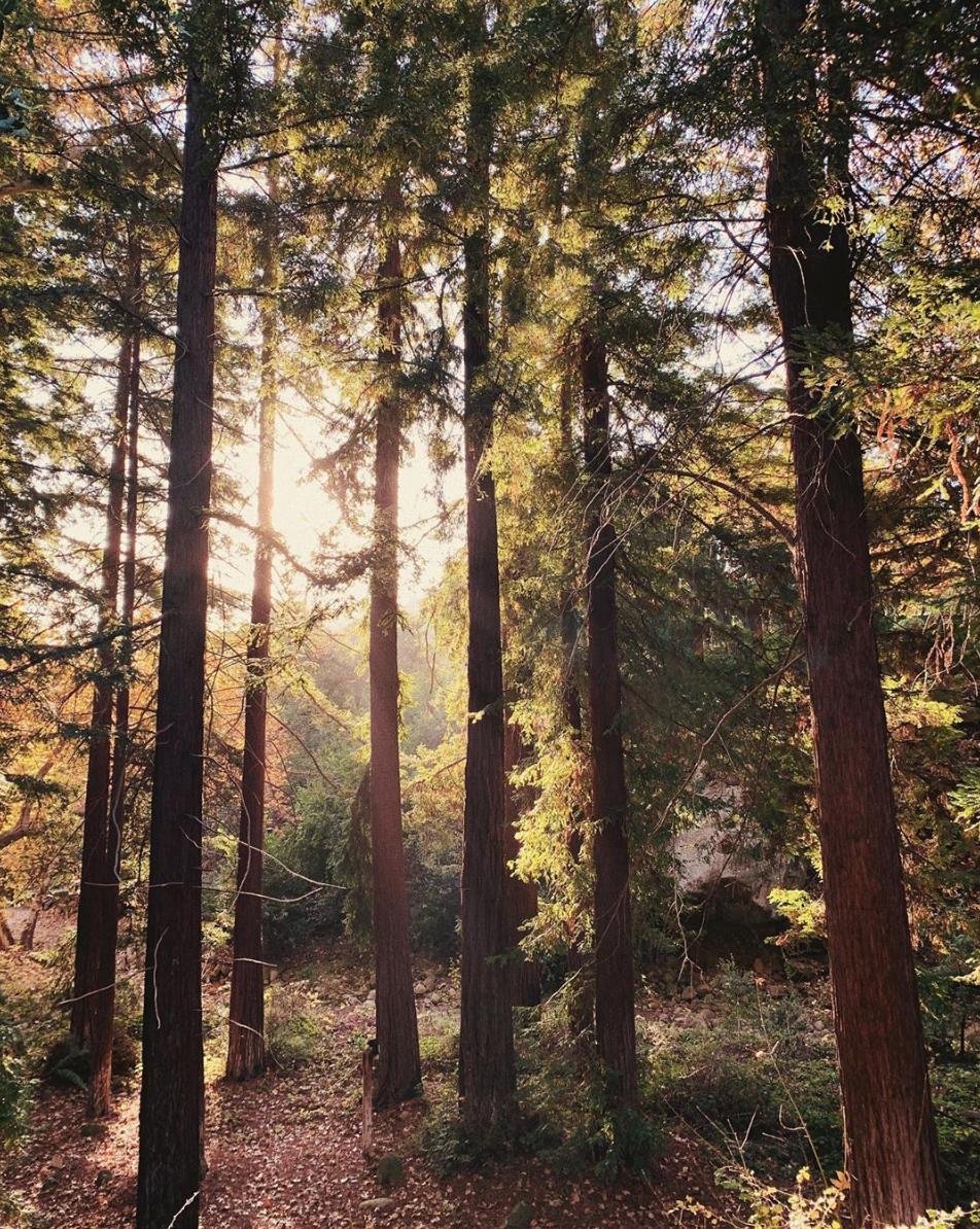 Trees by Nicki Sebastian