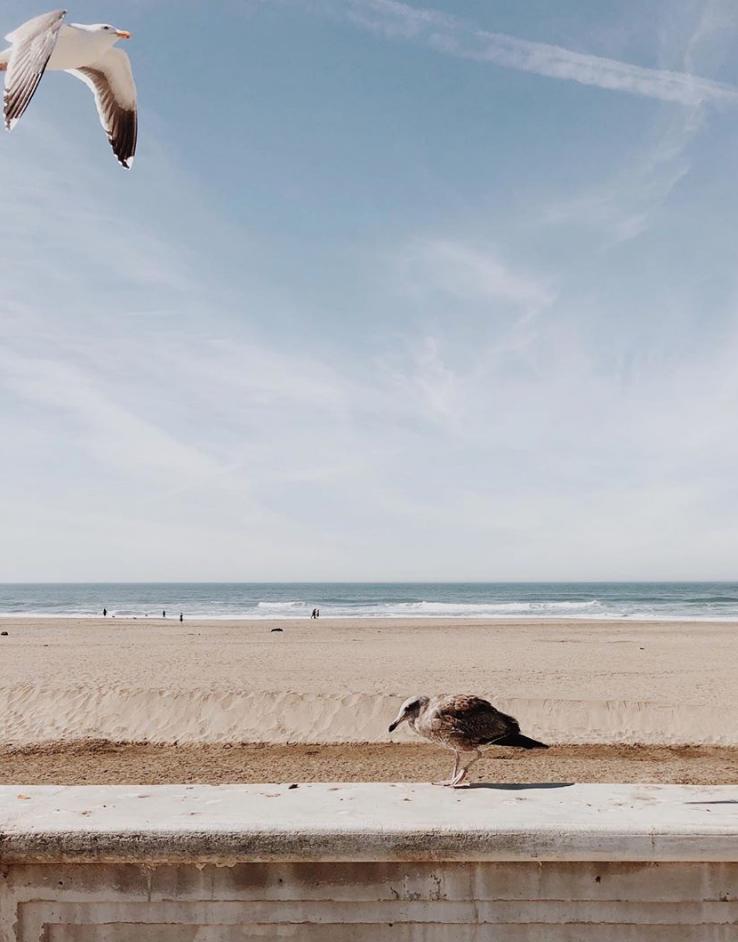 seagulls by lena corwin