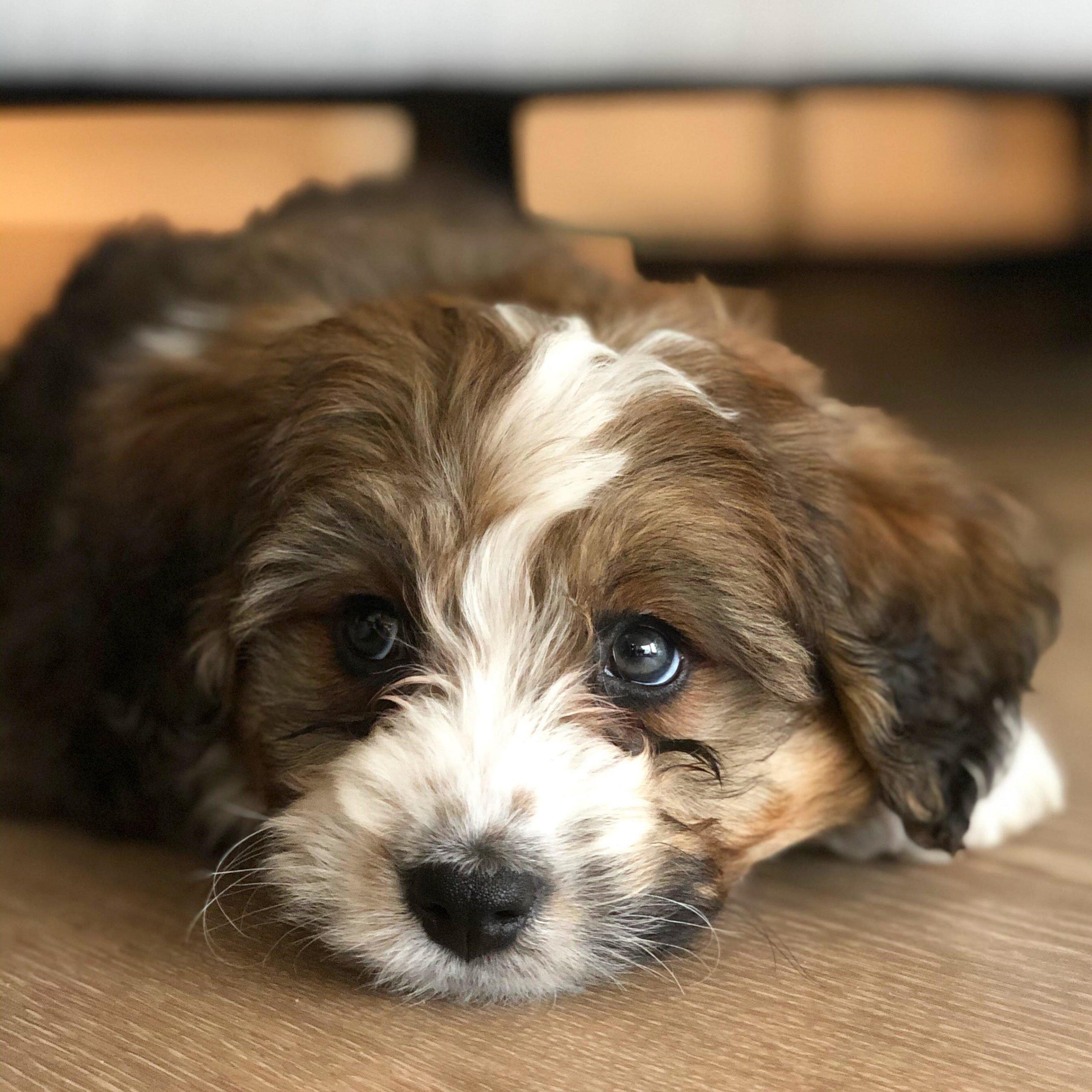 14 Adorable Quarantine Pets (With Photos!)