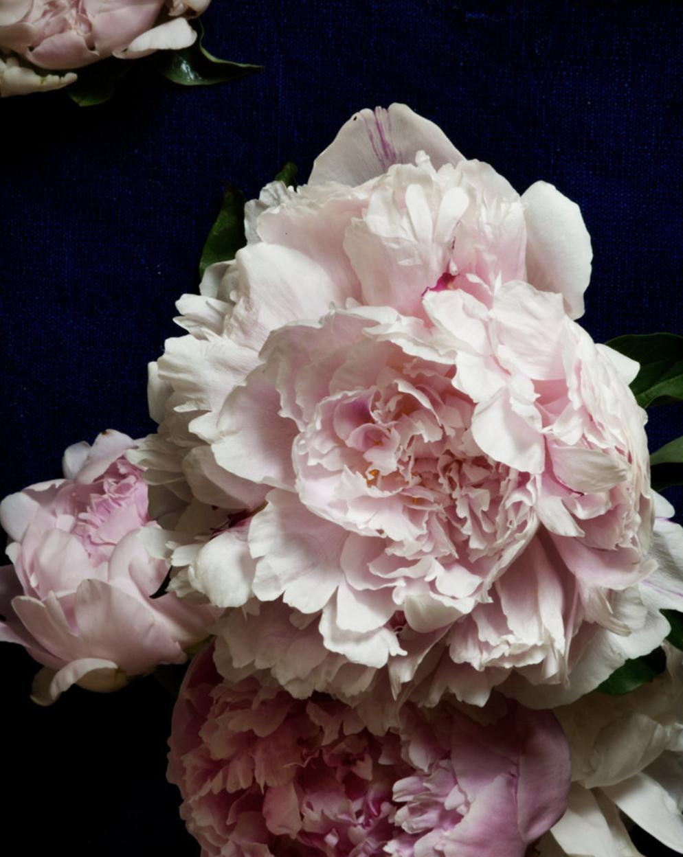 flowers by Kari Herer