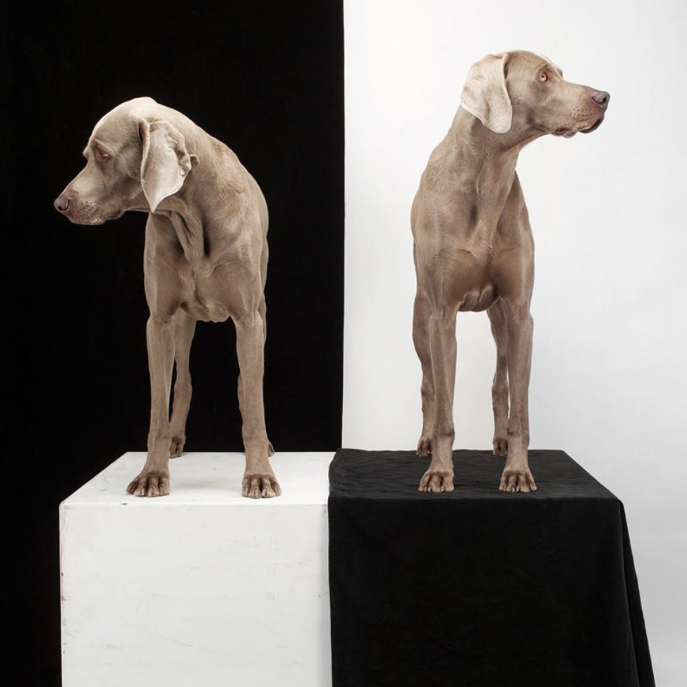 William Wegman dog print