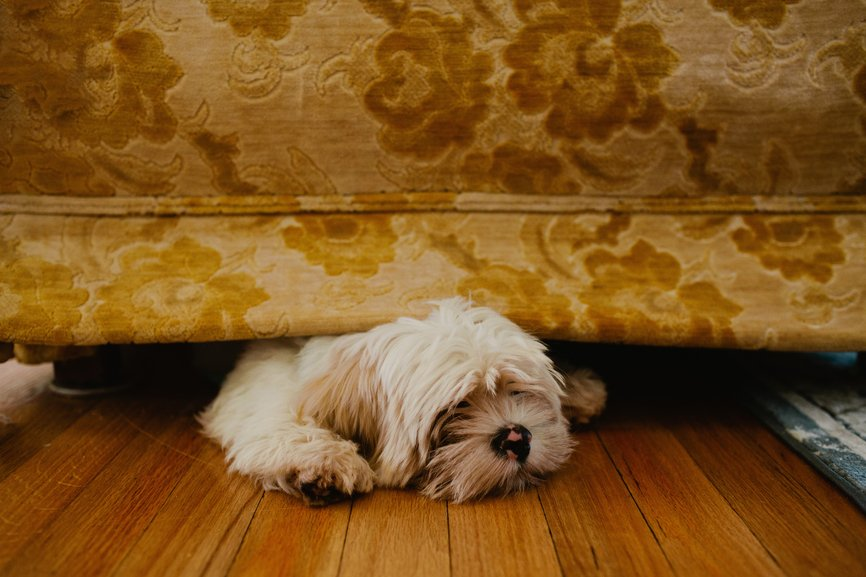 dog hiding under sofa