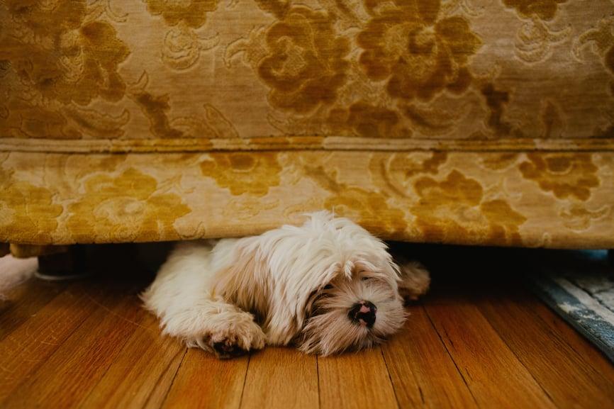 perro escondido debajo del sofá