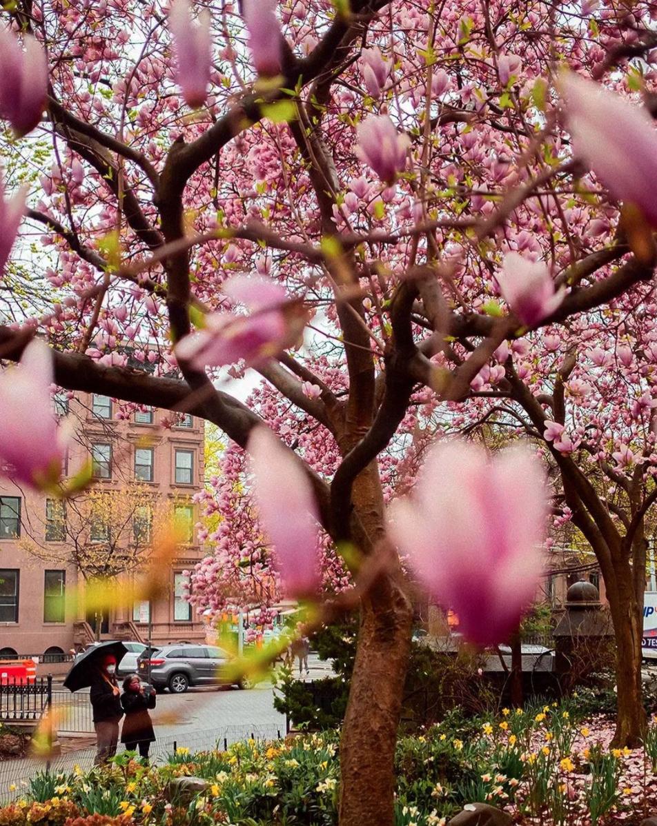 spring in Brooklyn by Latonya Yvette