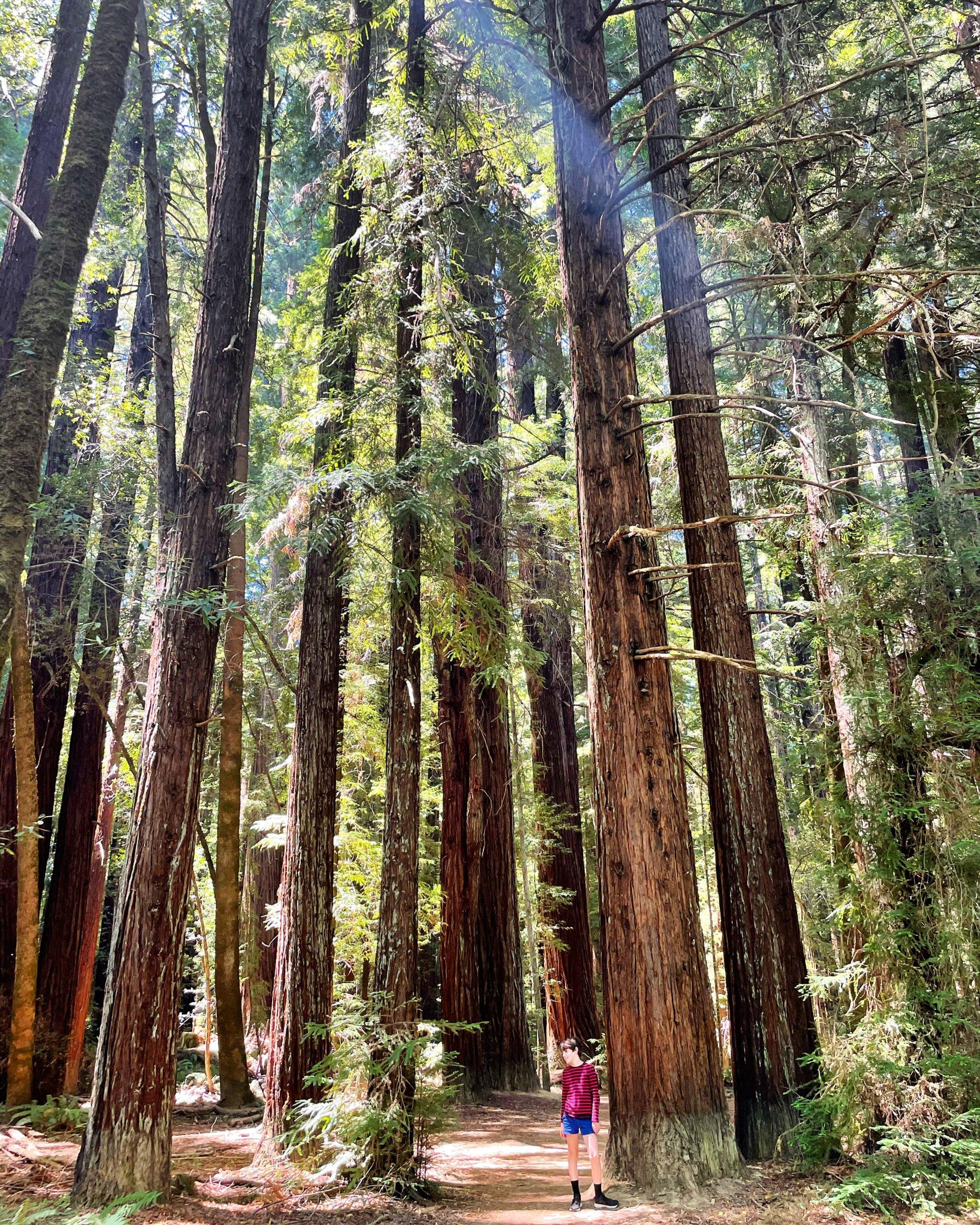 redwoods Hendy woods state park